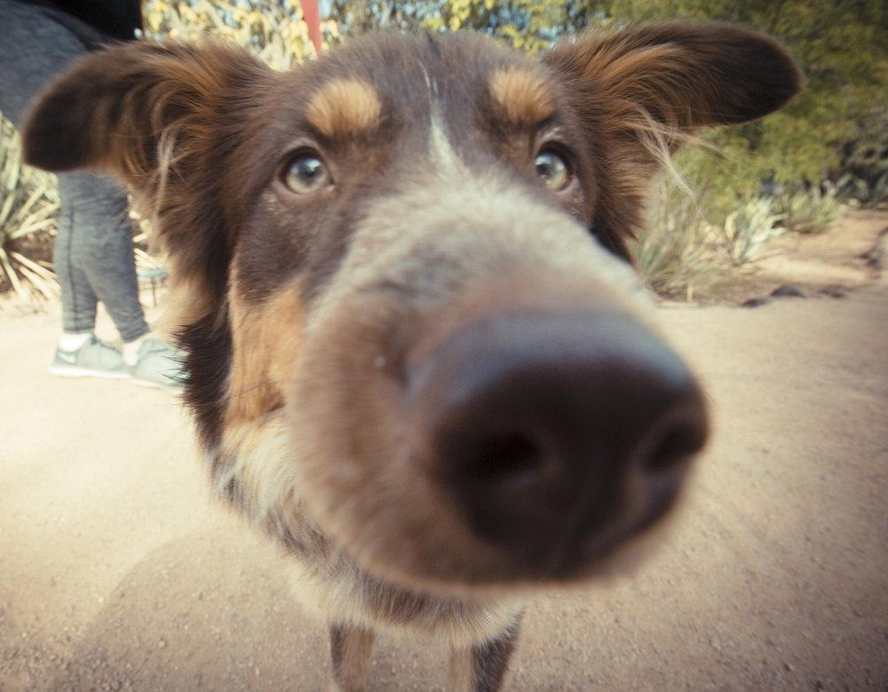 Arizona Pet Photography.jpg