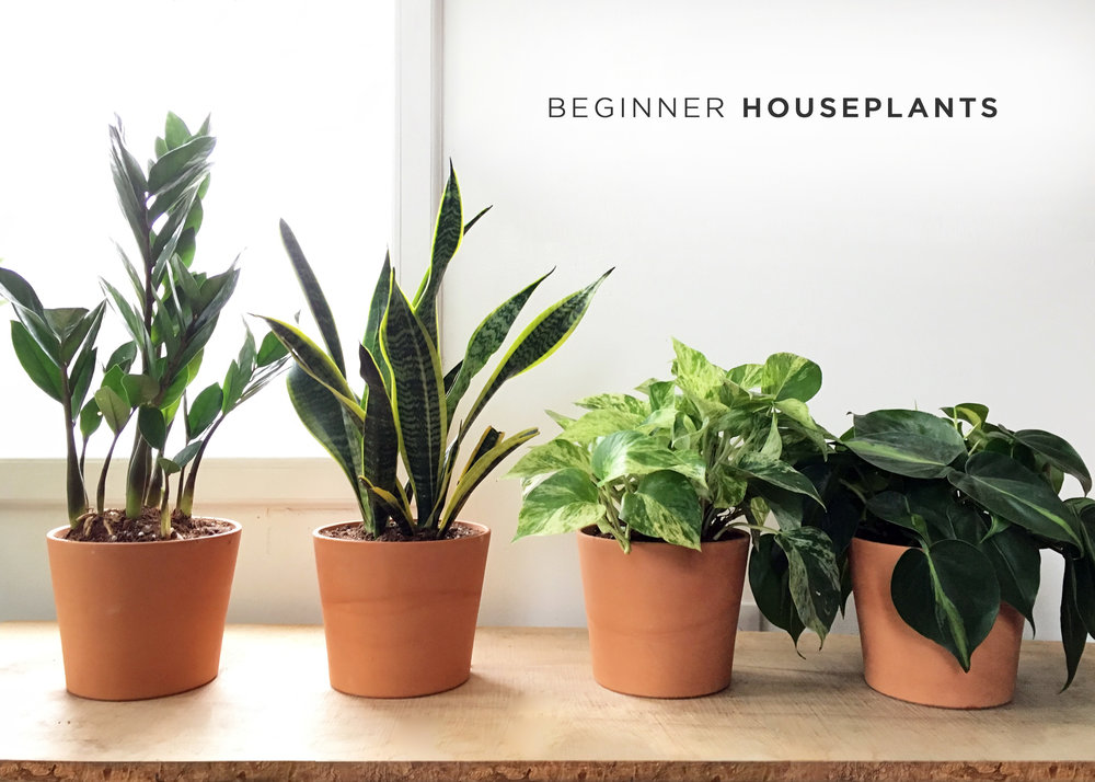 easy houseplants.jpg
