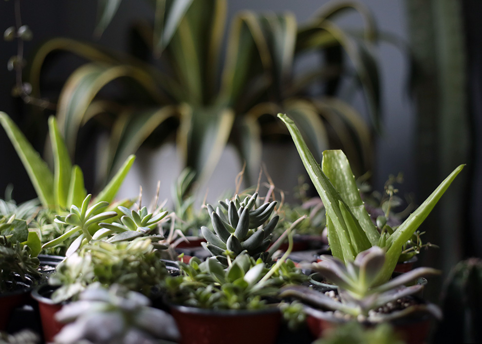 houseplant tips for beginners - drainage