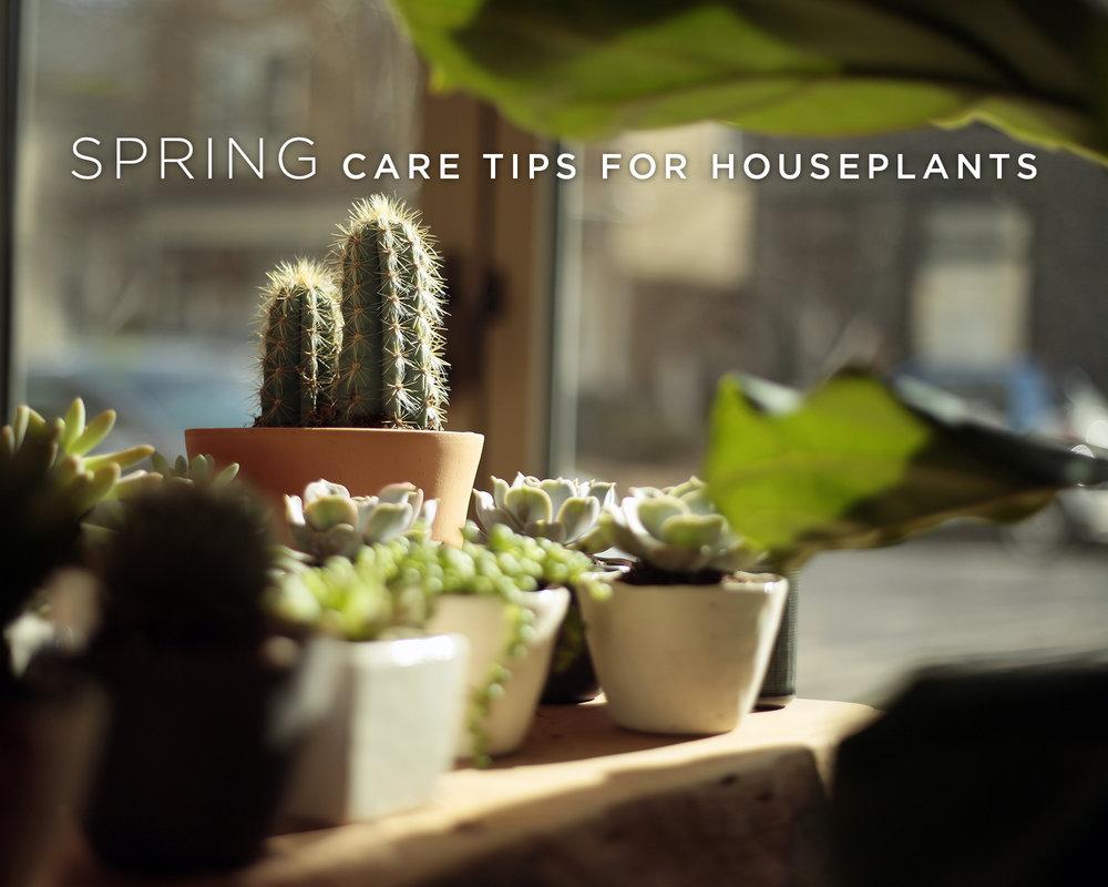 spring plant care
