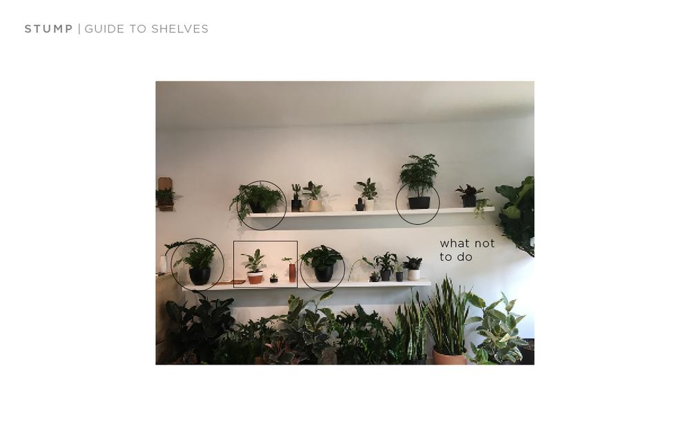 shelf guide11.png