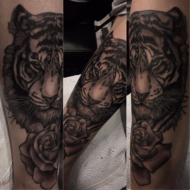 😺 added shading to this one. #norway #notodden #emperialtattoo #tattoo #tigertattoo