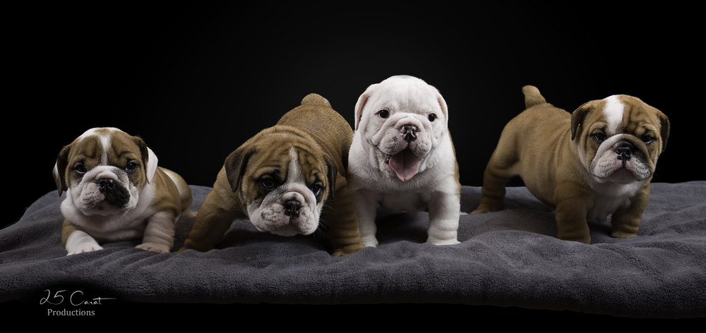 Annaly's Four Puppies.jpg