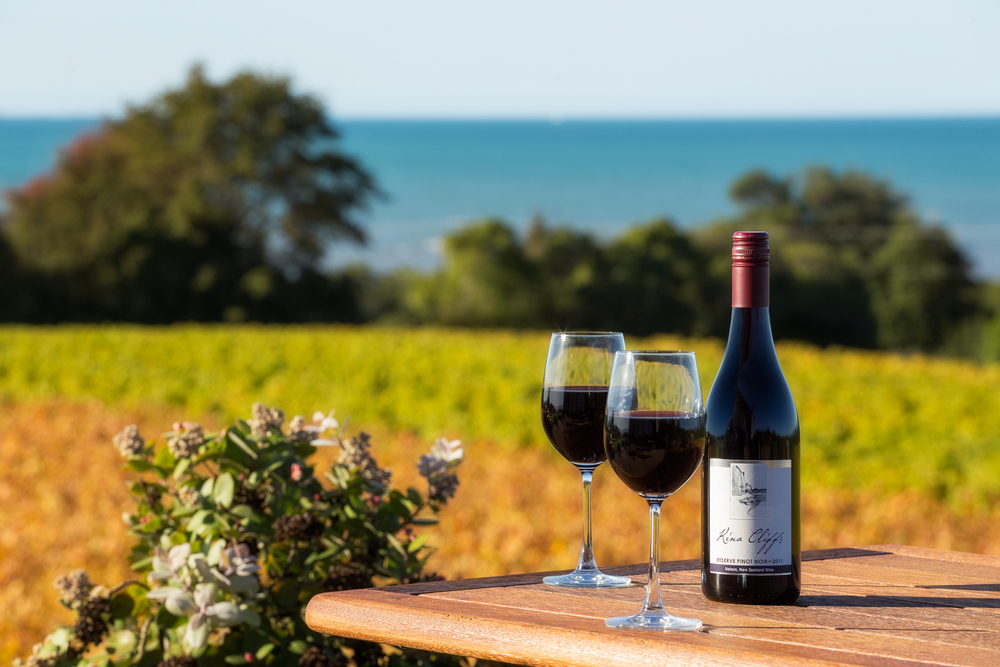 Image result for nelson new zealand vineyard