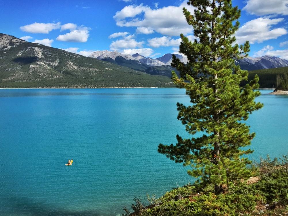 Glacier swims at Abraham Lake.