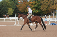 FIRST ONE - 2009 HANOVERIANSOLD - ON, CANADA