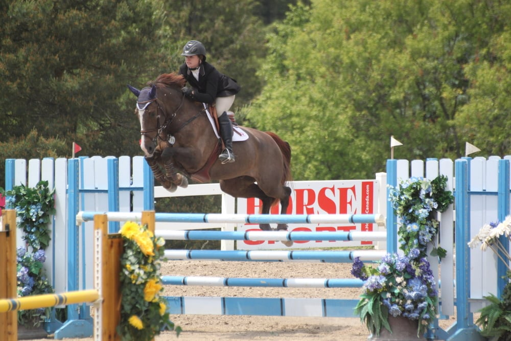 2001 KWPN Gelding - Trained and Shown by Kevin Holowack