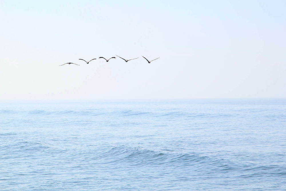 oceanside-surf-birds.jpg