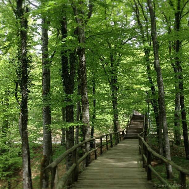 plitvice-croatia-trees.jpg
