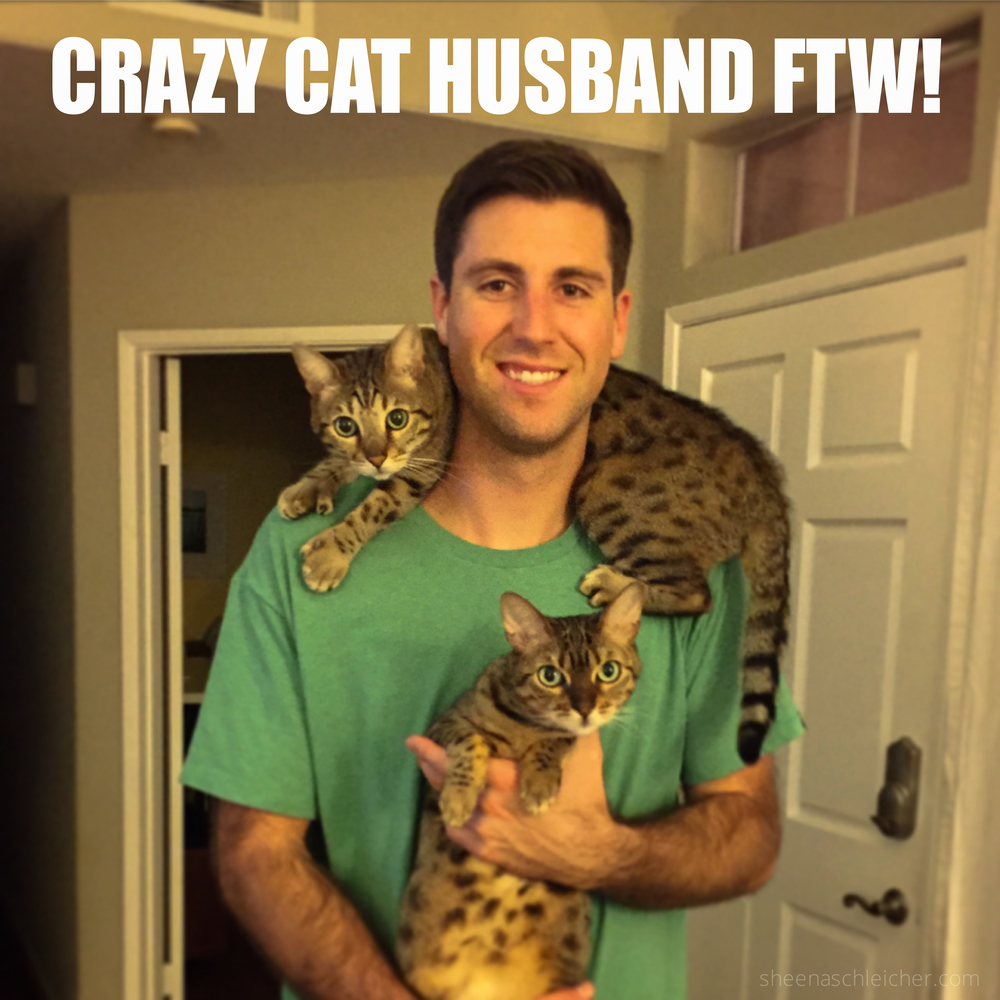 Crazy cat husband #cat #meme