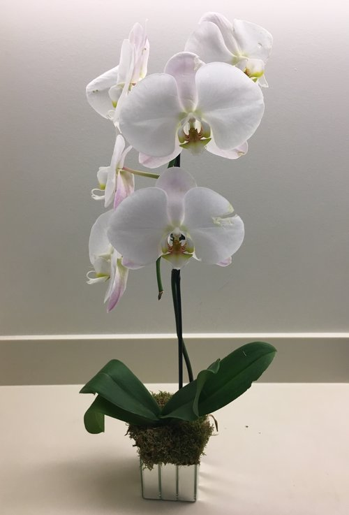 White Orchid In 4 Mirror Strips Cube Glass Vase Flowers By Yianni