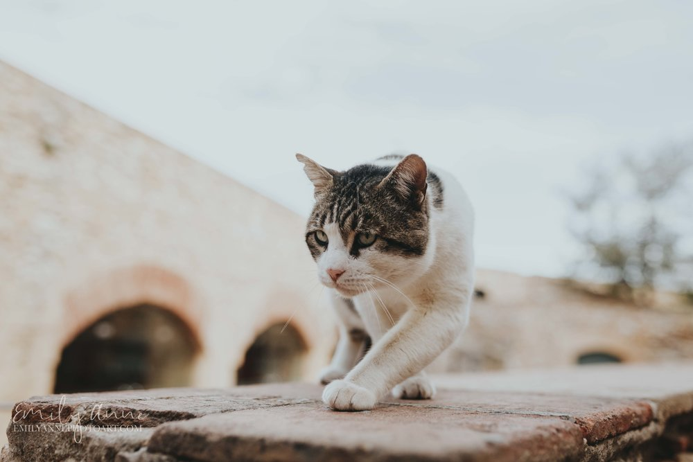 cute kitty ready to pounce in Tarragona Spain animal pictures; epic cat pictures