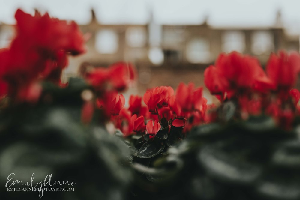 seeing things through the eyes of a European designation traveler photographer best floral pics in London UK by Emily Anne Photo Art