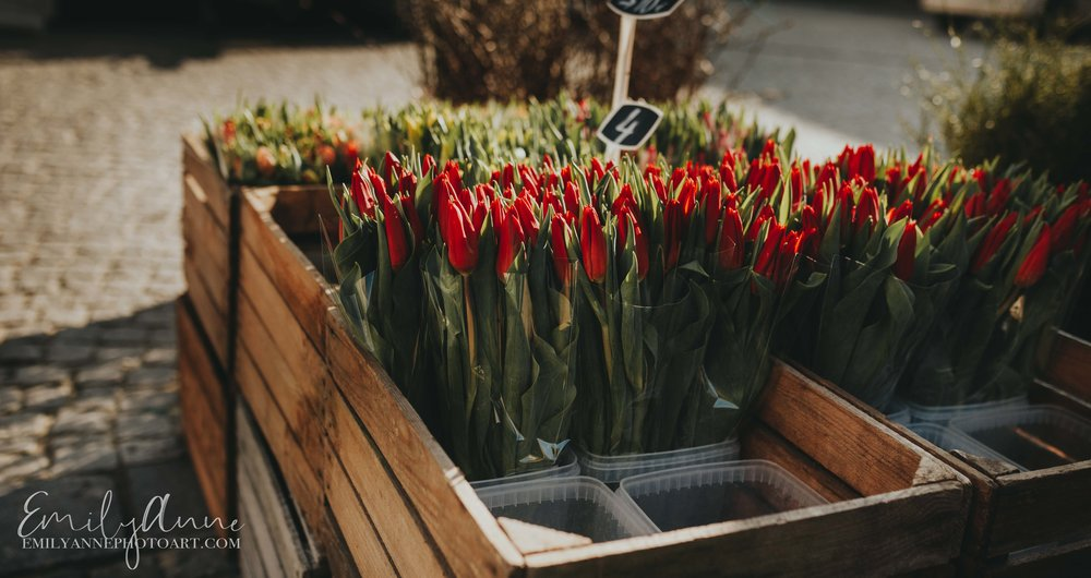 lovely tulips in Belgium in the Springtime by European Belgium Leuven Barcelona Nashville wedding portrait photographer
