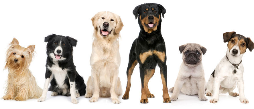 group of dogs chicago.png
