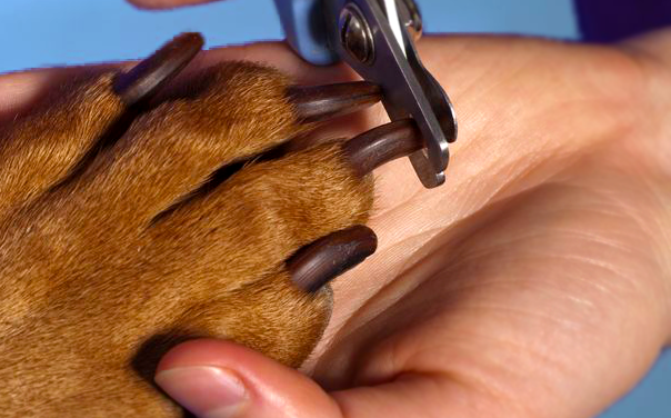 dog grooming nail trim.png