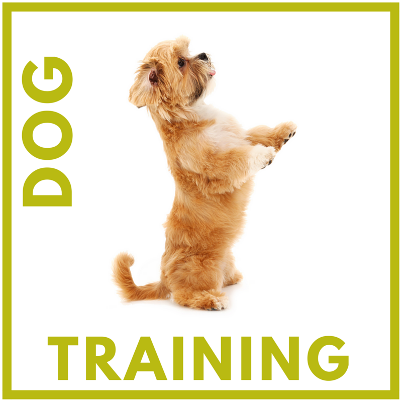 TRAINING WIDGET(1).png
