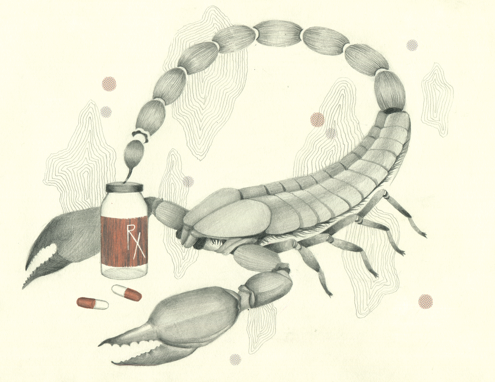 2015 Mixed Media  As a part of my thesis, this illustration explores the medical potential of scorpion venom.