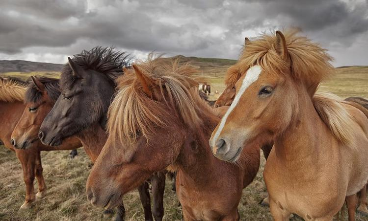 Copyright Owner;www.iceland-photo-tours.com