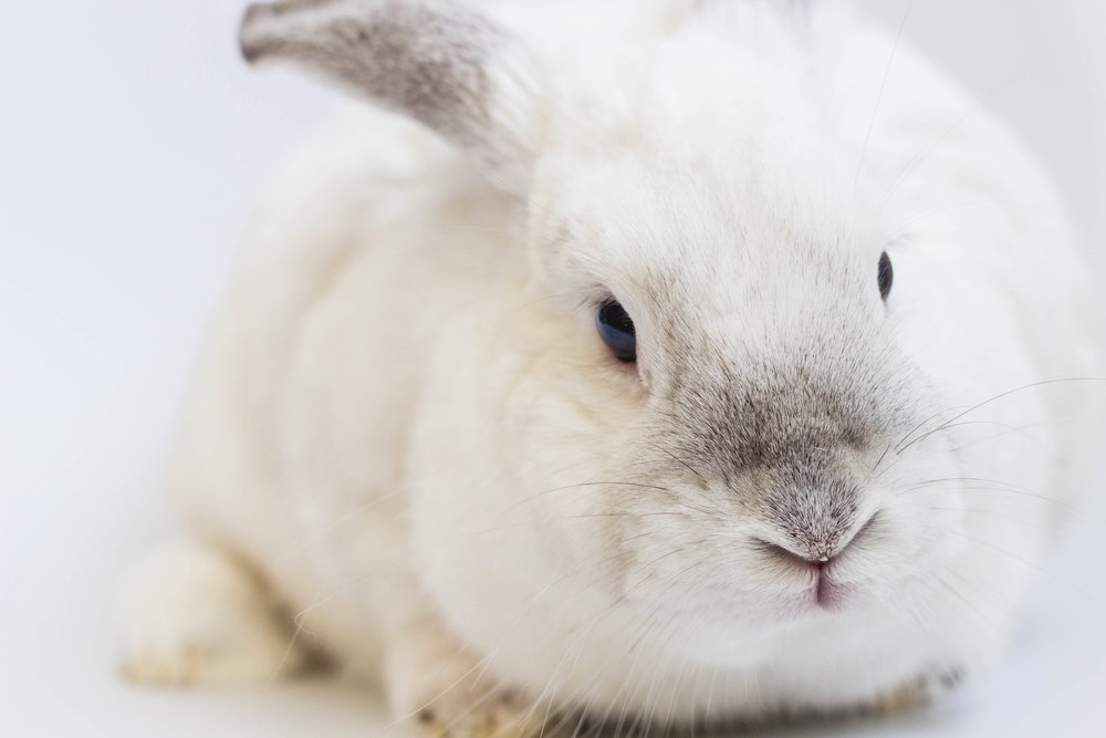 5 Tips To Going Cruelty Free in 2019
