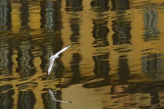 Dana Styriakova white bird