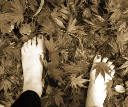 leaves feet.jpg