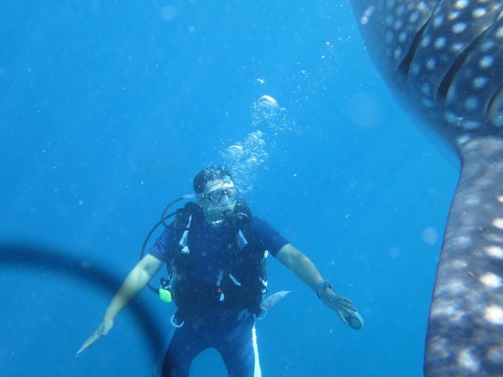 Whale Shark_2015_1.jpg