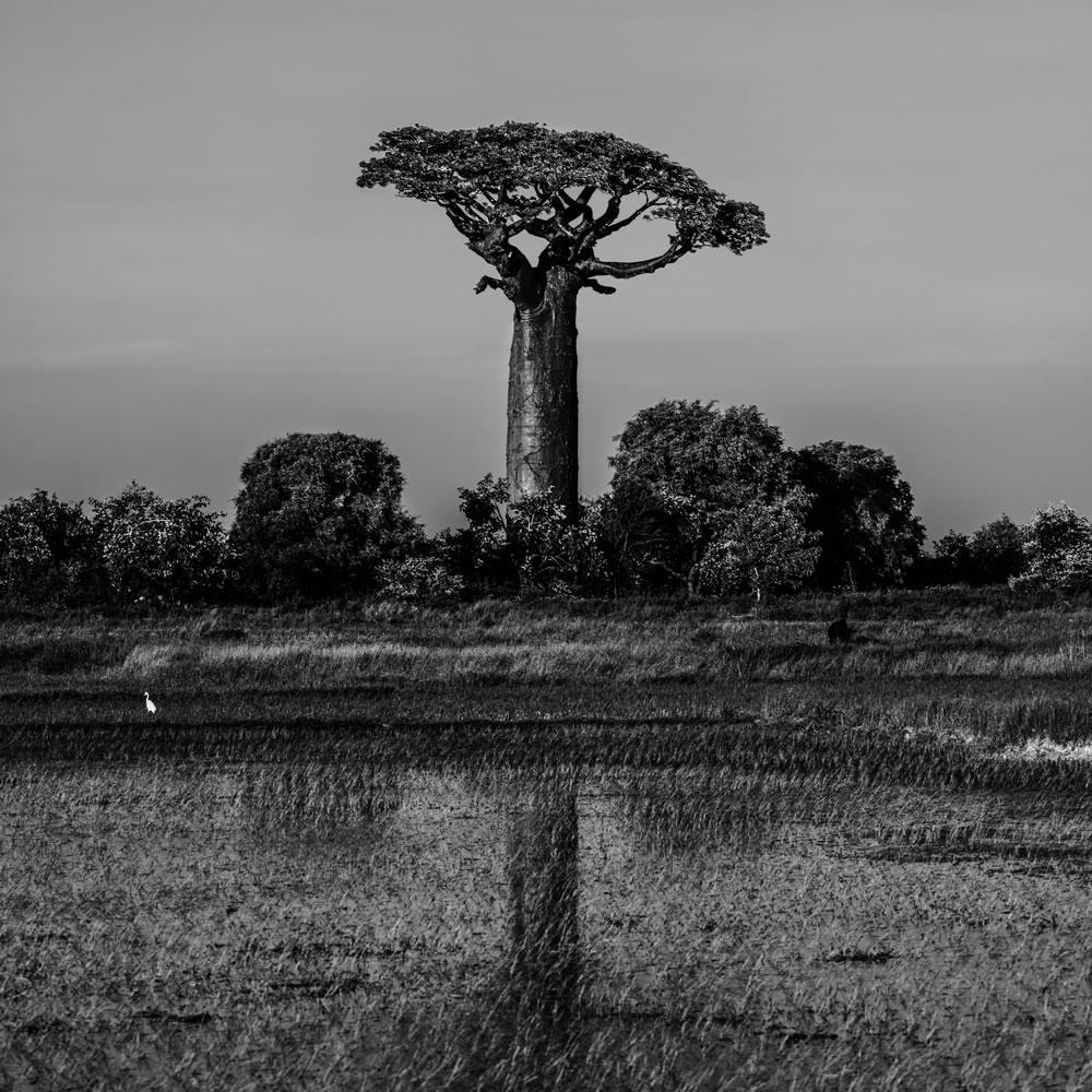 Baobab - page 3.jpg