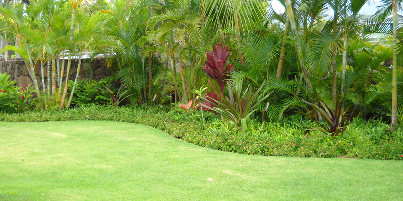 Green Scene Lawn U0026 Landscape | Landscaping, Yard Care And Land Service,  Papaikou, Hilo, Hawaii