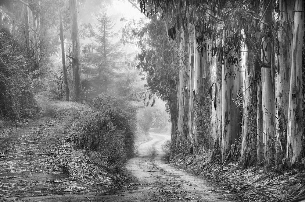 Harold Davis -Road Less Traveled.jpg