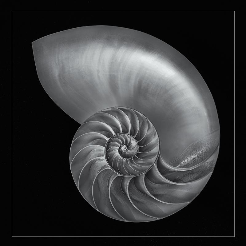 Nautilus February 20 2014