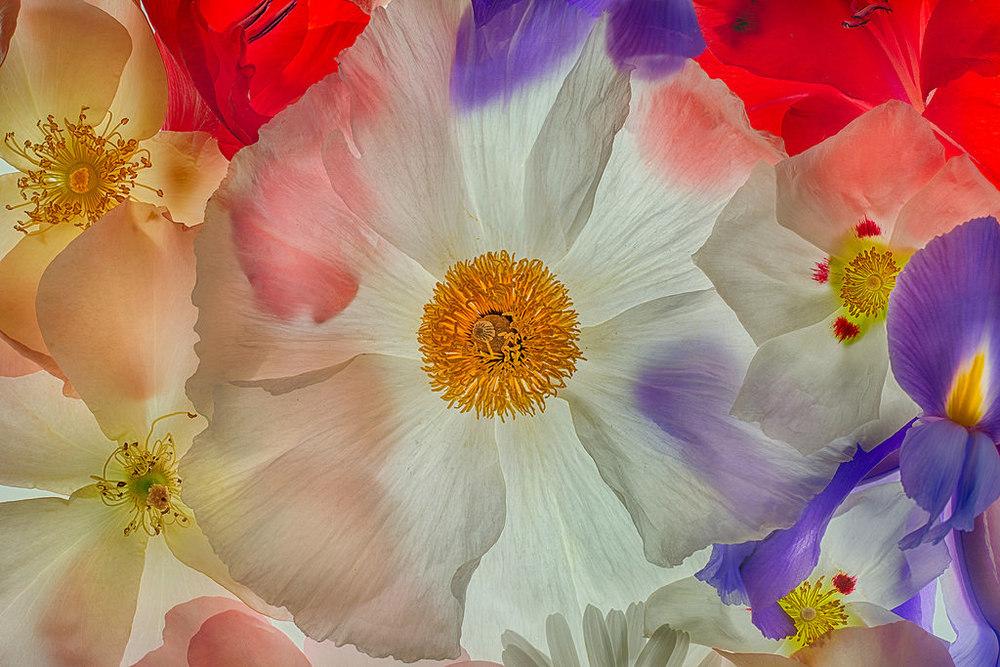 flowerharolddavis