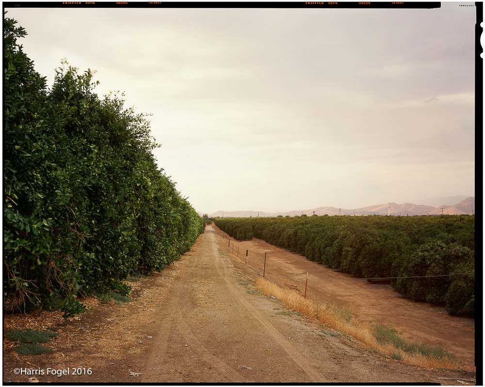 Hfogel_QA16_Orange_Grove,_Porterville.jpg