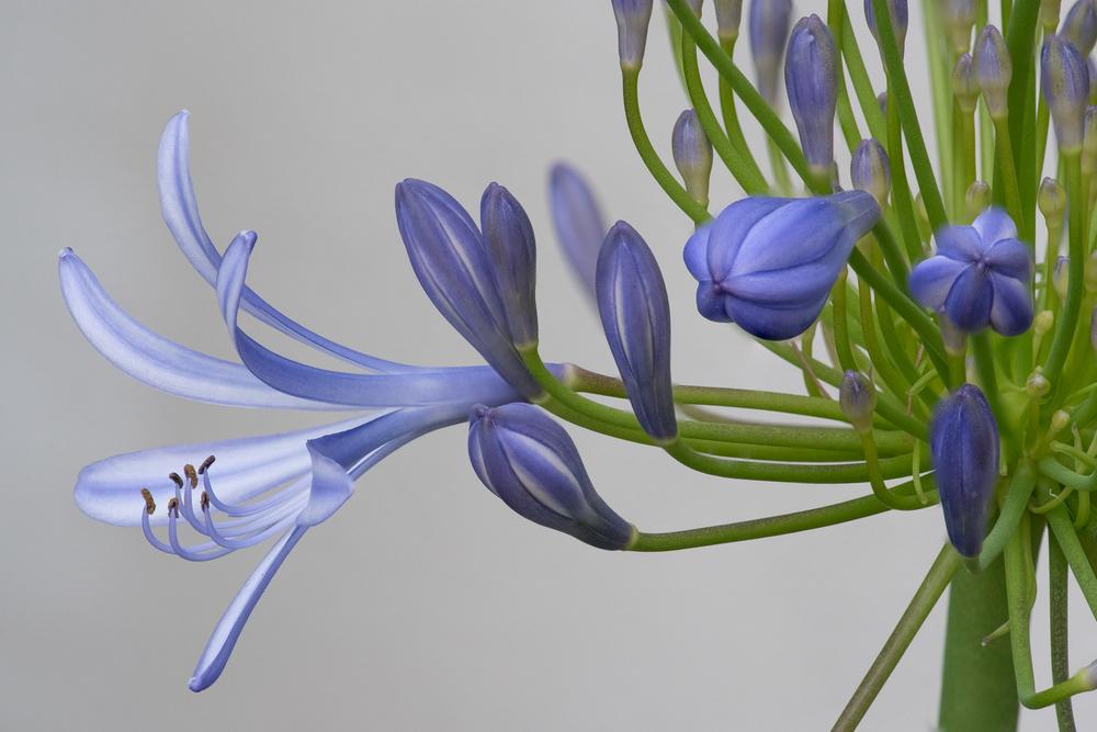 Wonder in Blue.jpg