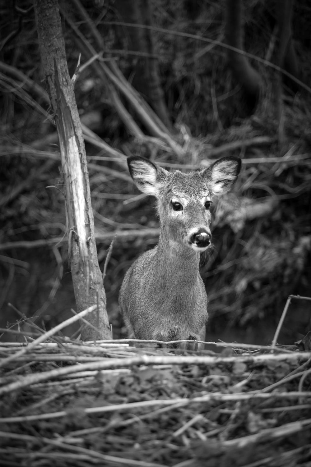 deer-rub.jpg