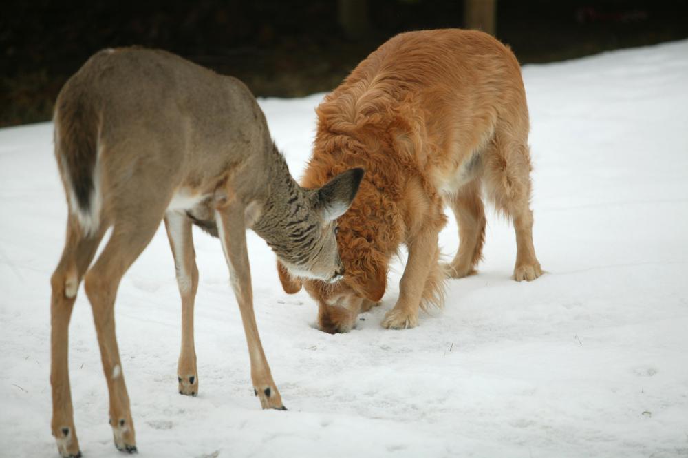 dog-deer.jpg