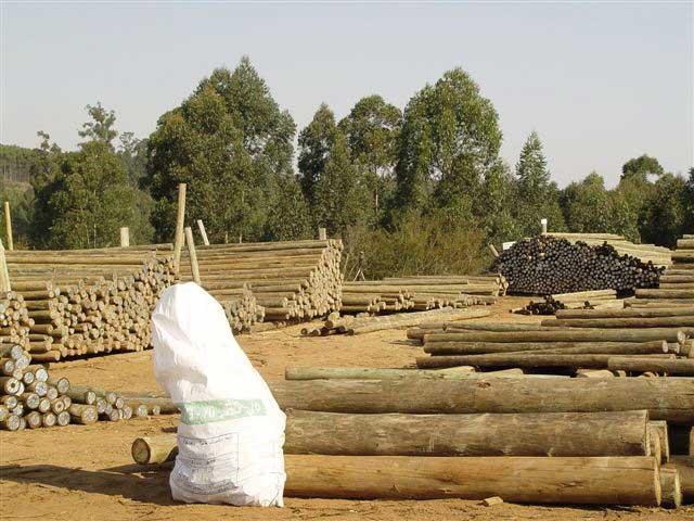 eucalyptus-poles