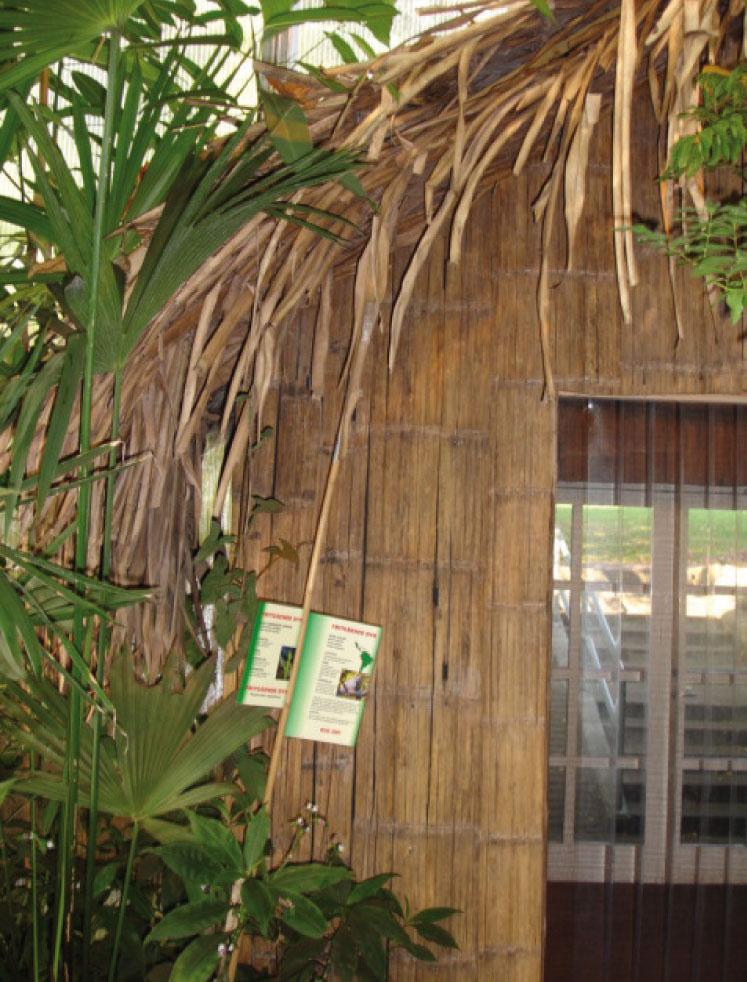 Jungle5.jpg