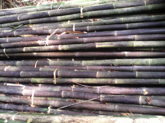 mountain-bamboo