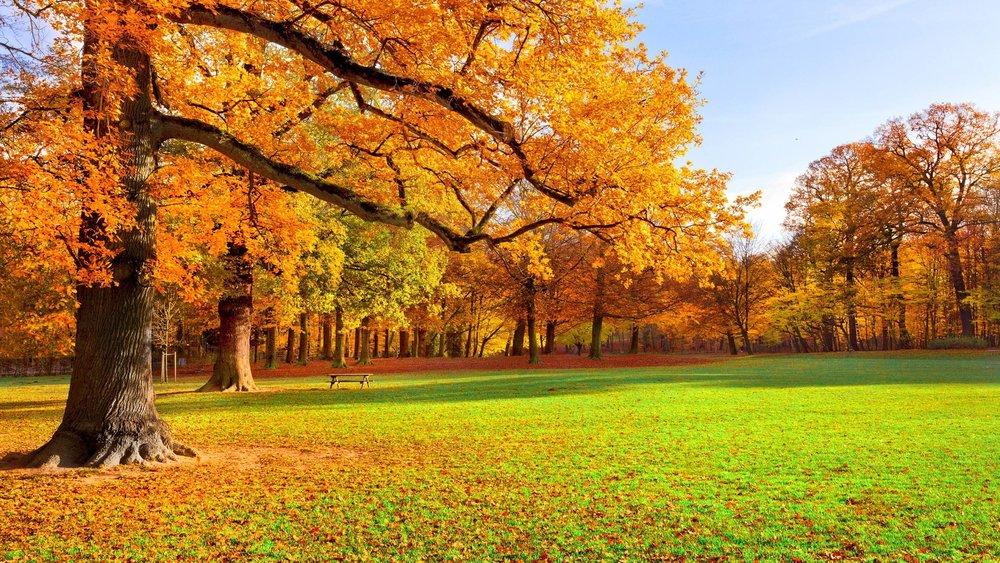 fall1.jpeg