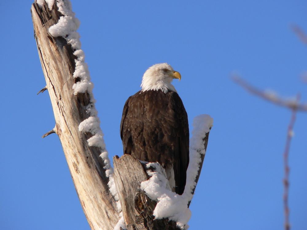 eagle perch.jpg
