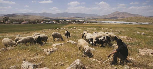 herder-area-c