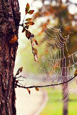 IMG_9882+ps+fresh+autumn.jpg