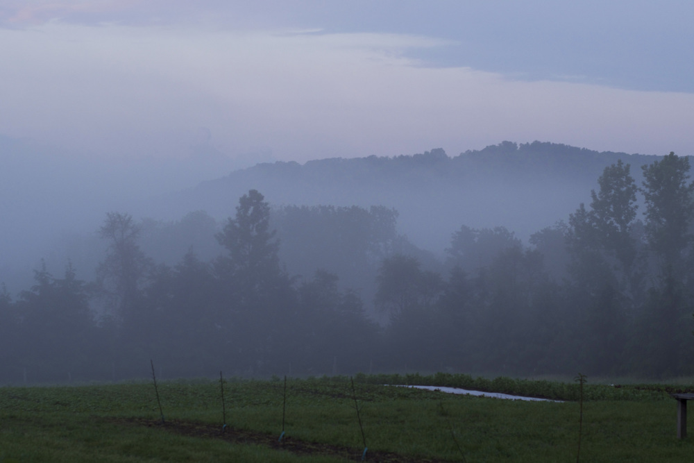 misty morning over timberlee.jpg