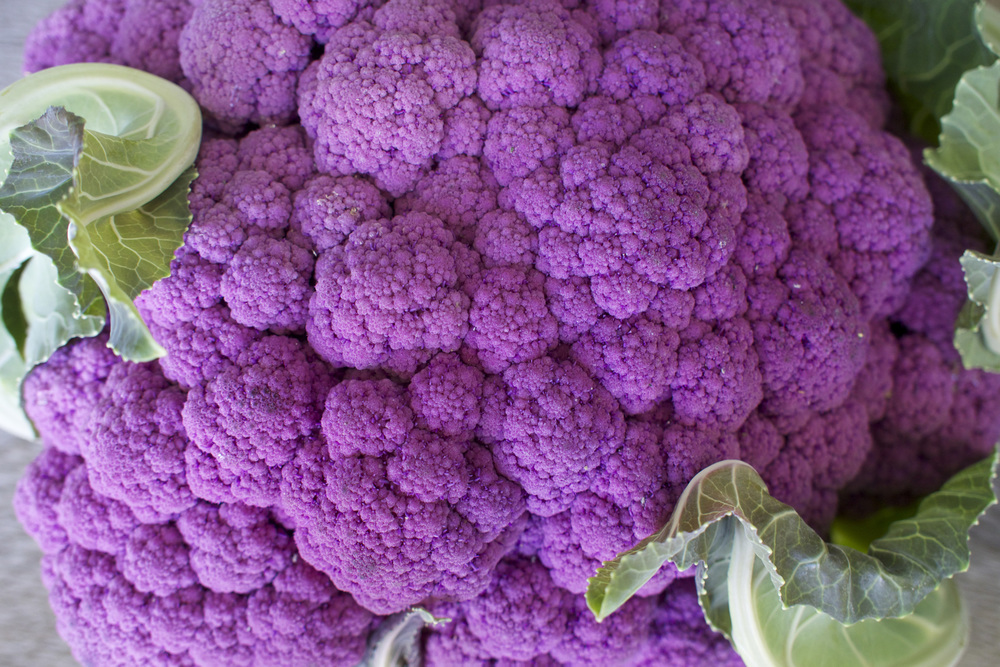 purple cauliflower 2.jpg
