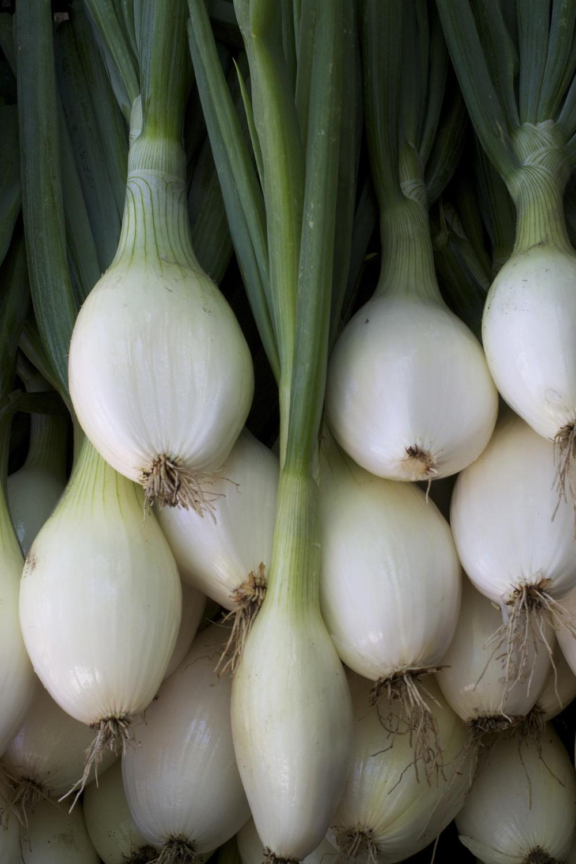 valencia onions.jpg