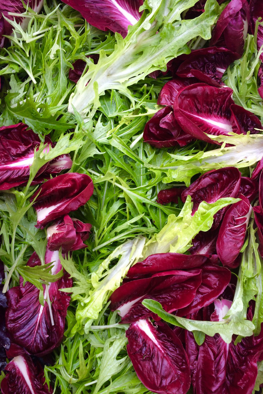 Winter salad mix featuring Treviso radicchio, Dark Lollo Rosso lettuce, mizuna, frisée, Bull's Blood beet greens & Monk's Beard leaf lettuce.