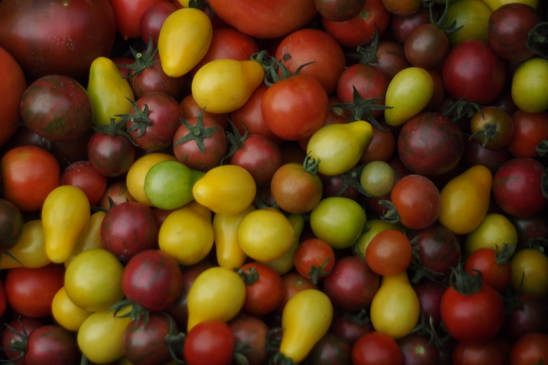 Tomatoes: Yellow Pear, Nyagos, Earliana, Green Grape, Velvet Red, Purple Bumble Bee, Large Red Cherry, Martino's Roma.