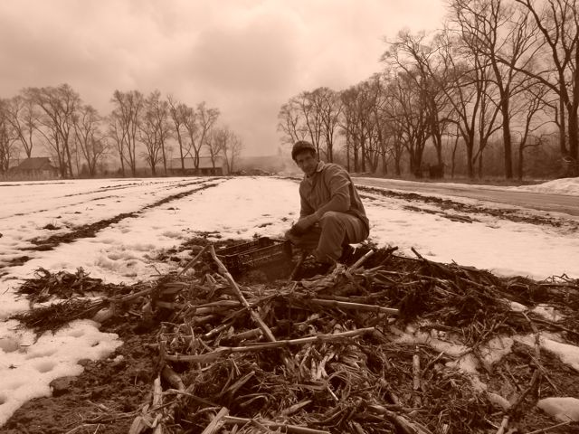 digging spring carrots. last day of march.