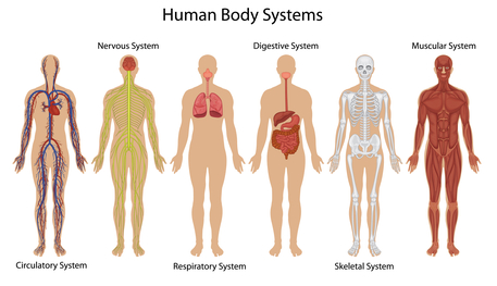 Whole Food Based Nutrition Human Body Systems